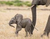 BABY ELEPHANT PHOTO Print...