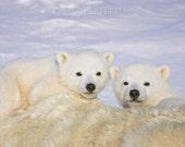 Baby Animal Nursery Print...