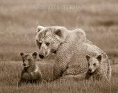 MOM and BABY BEARS Photo,...