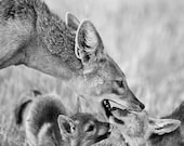 Cute Baby Animals, Jackal...