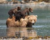 Cute MOM and BABY BEARS P...