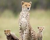 Mom and Baby Animal Photo...