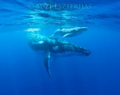 Baby Whale and Mom Photo,...