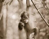 CUTE BABY ORANGUTAN Photo...