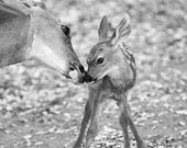 Cute MOM and BABY Deer Ph...