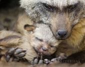 BABY FOX SNUGGLE Photo Pr...