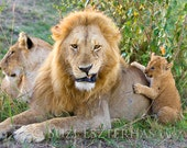 Funny Lion Dad and Baby P...