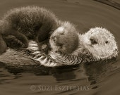 BABY SEA OTTER and Mom Ph...