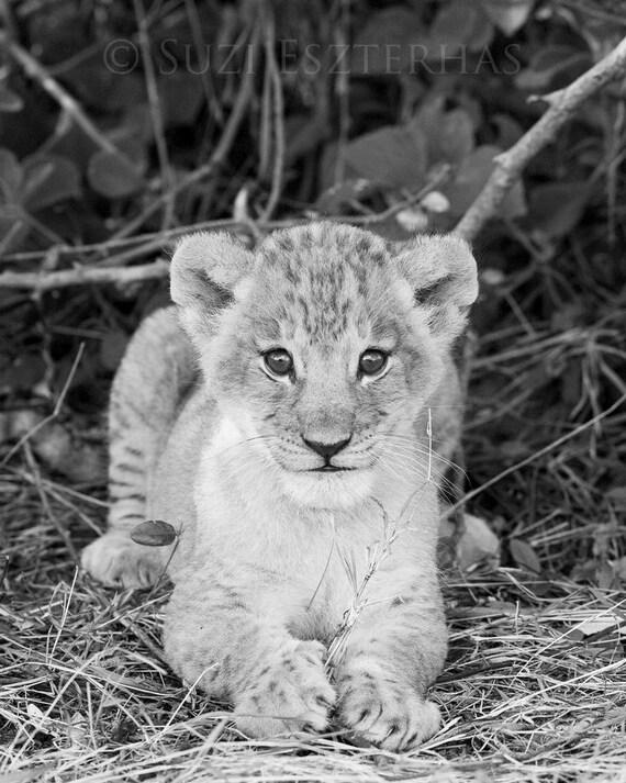 Niños de Safari vivero León bebé foto blanco y negro