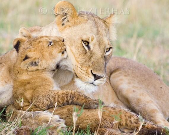 Guardería de animales León bebé besos mamá foto impresión