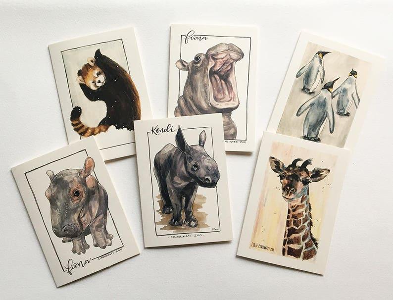 Buy Here Pay Here Cincinnati >> Cincinnati Zoo Animals 6 Pack Greeting Card Set | Etsy