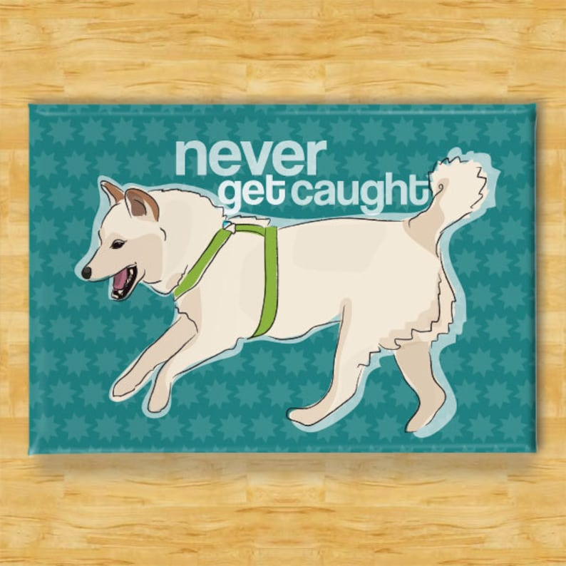 Refrigerator Magnets with Shiba Inu - Never Get Caught - White Cream Shiba  Inu Gifts Dog Fridge Refrigerator Magnets