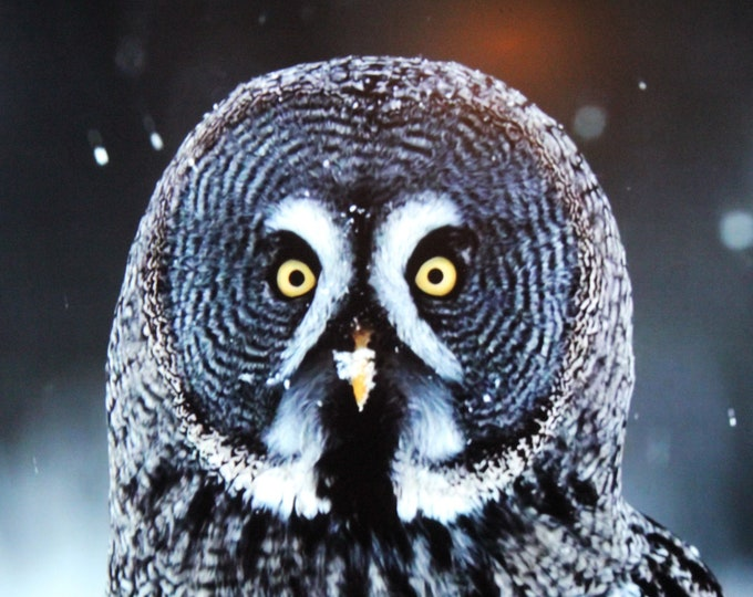 """Did I Hear a Mouse? Great Gray Owl Photograph Thinwrap 16"""" x 16"""""""