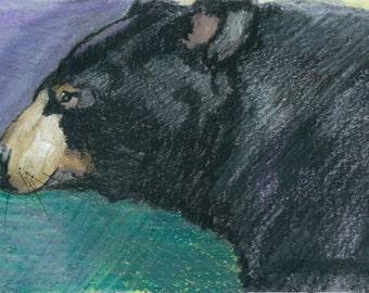 I Like Picnics Too- Original Portrait of a Black Bear- Prints and Cards