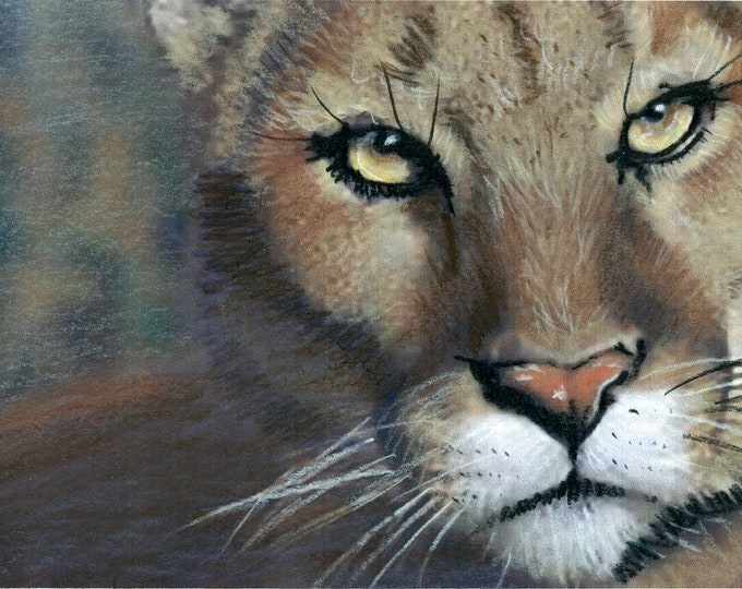 The Eyes have It- Original Prismacolor Drawing of Cougar - Greeting Card (see Separate Listing for Prints)