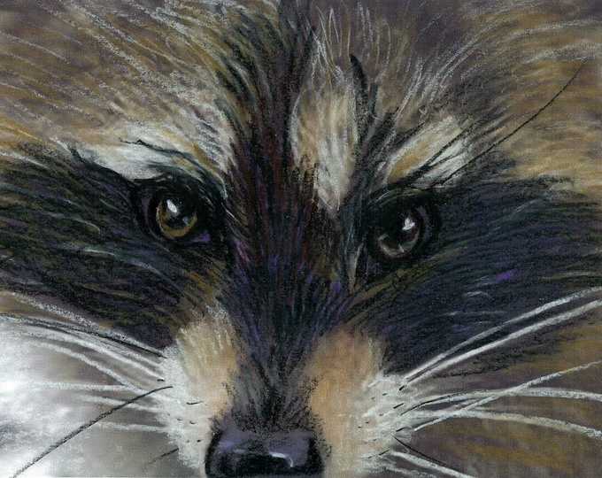Rascal - Prismacolor Painting of a Raccoon Face - Prints and Cards