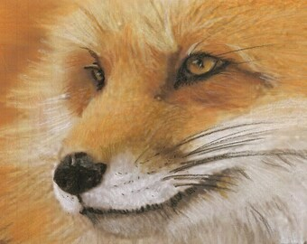 Foxy - Greeting Cards and Photo Prints From Original Prismacolor Drawing