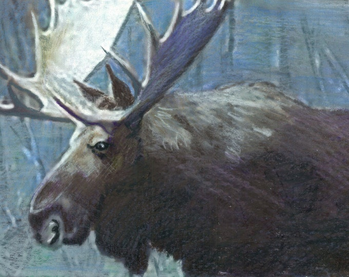Forest King - Original Moose Prismacolor Painting- Prints and Cards