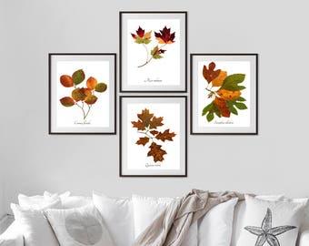 Autumn Leaves Botanical Print Set - 4 Fall Tree Leaves Art Prints - Nature Wall Art -  Home Decor Print Collection