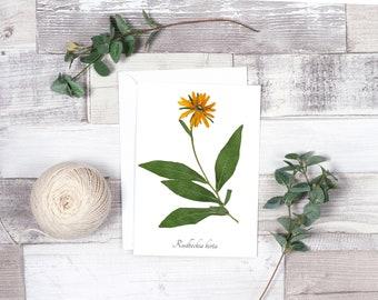 Black Eyed Susan Botanical Greeting Card - Blank Greeting Card - A7