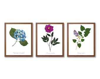 The Queens of the Garden - Mother's Day Botanical Print Collection - Vintage Style Garden Art Prints