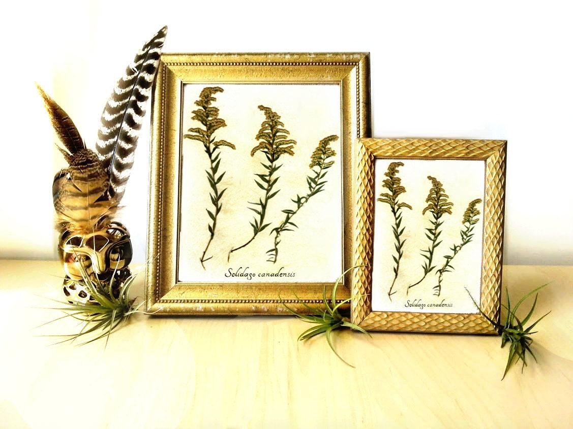 Goldenrod Pressed Botanical Art Print Reproduction Herbarium | Etsy