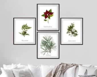 Christmas Botanical Print Set - 4 Winter Decoration Art Prints - Yule Wall Art