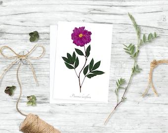 Garden Peony Botanical Card - Botanical Print - Blank Inside