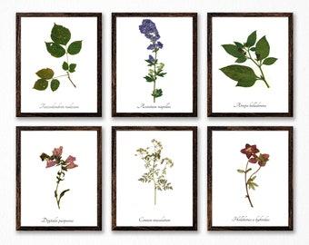 The Poison Plants Botanical Print Collection - Vintage Style Poison Garden Art Prints