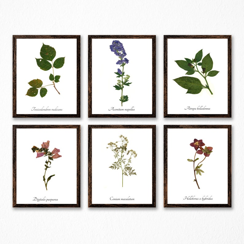 The Poison Plants Botanical Print Collection  Vintage Style image 0