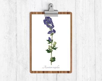 Pressed Monkshood Botanical Print - Reproduction Herbarium Art Print - Botanical Art - Nature Home Decor