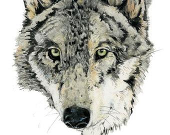 Mr Wolf Print Giclee print of wolf head 8x11 art print