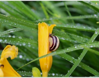 Snail on Spring Lily