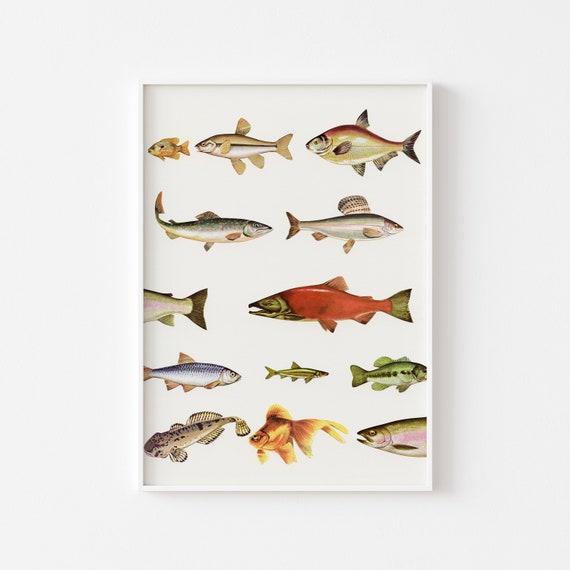 Fish Art Print, Fishing Decor, Bathroom Art, Sea Life Prints - Fishing Line