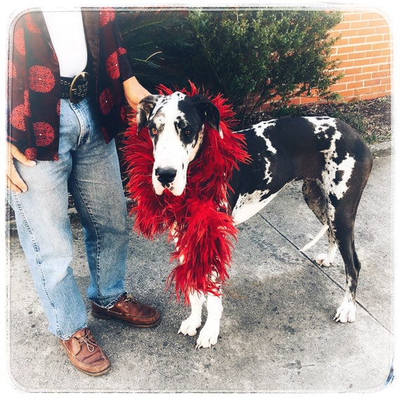 feather boa / ostrich feather boa / red feather bo
