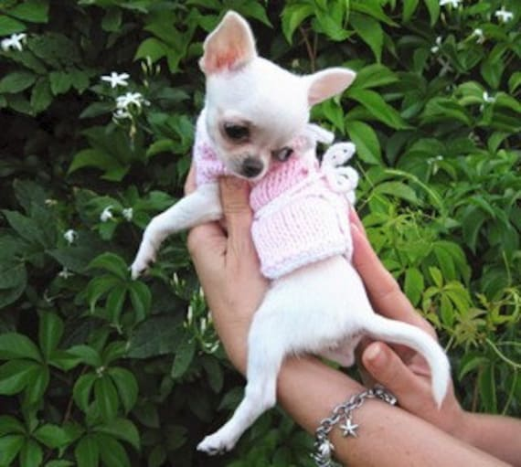 Welpen Pullover Chihuahua Kleidung Pet Fashion Nerina52 Etsy