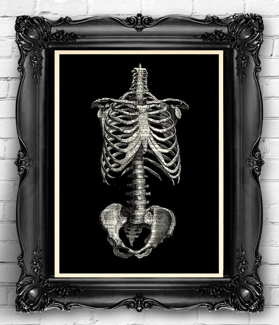 Caja torácica esqueleto huesos lámina cartel de cráneo de | Etsy