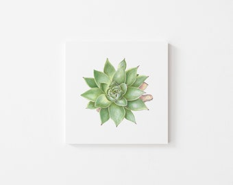 Green Succulent, SQUARE Print, Home Decor, Wall Art, Garden Gifts, Botanical print, INSTANT DOWNLOAD, Greeting Card, postcard art, Mom gift