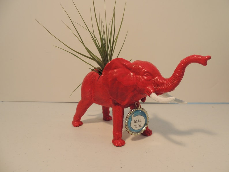 Alabama football fan gift. Live air plant nestled in red elephant planter