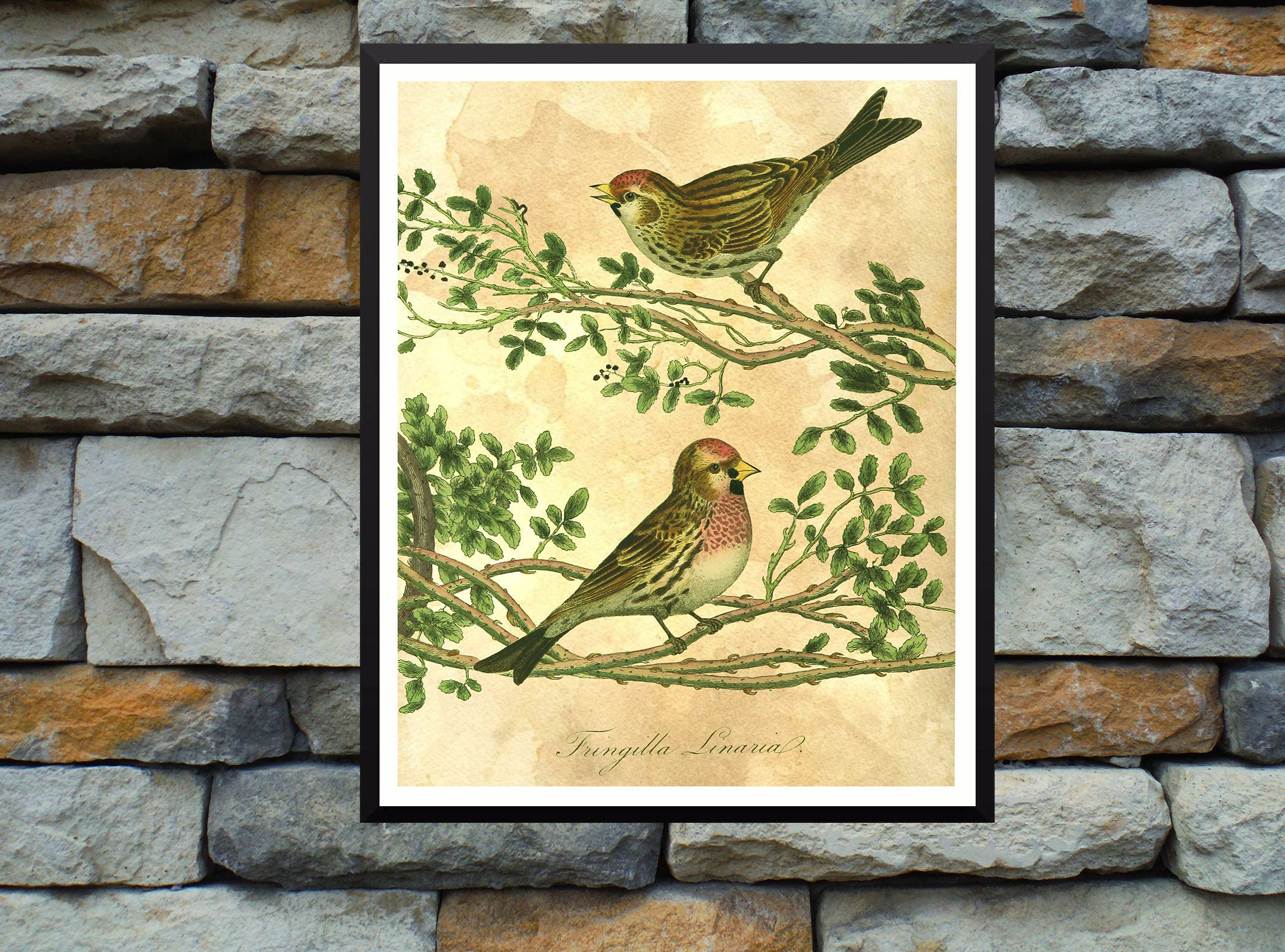 Vintage Bird Wall Art Print-Farmhouse Wall Art Print-Baby | Etsy