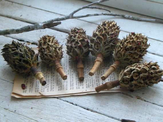 Magnolia Tree Bulbs Seed Pods For Crafting Christmas Ornaments Etsy