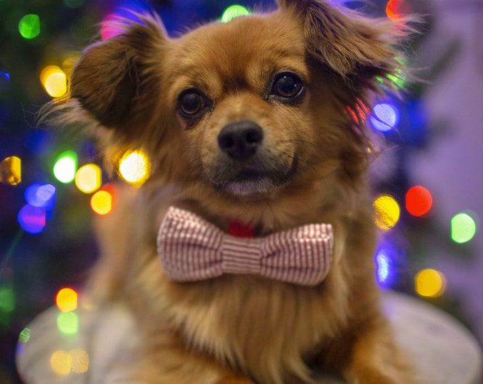 Fur Baby Bow Tie - Dog neck tie, Christmas, pup accessory