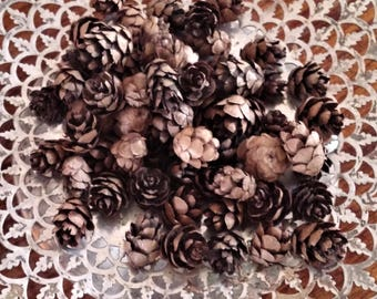 Mini Pinecones, natural winter decor and craft supply