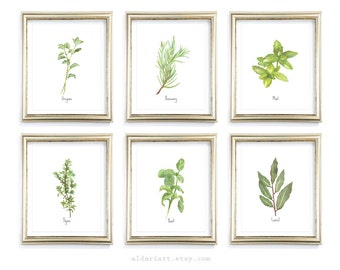 Culinary Herbs Art Prints - Kitchen Herbs Wall Art - Oregano Basil Thyme Art - Modern Rustic Home Decor - Choose From 10 Herbs - Aldari Art