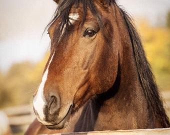 Horse Decor, Equine Prints, Girls Room Decor, Barn Scene, Equine Art, Horse Prints, Horse Photographs, Teens Room Decor, Pictures Horse