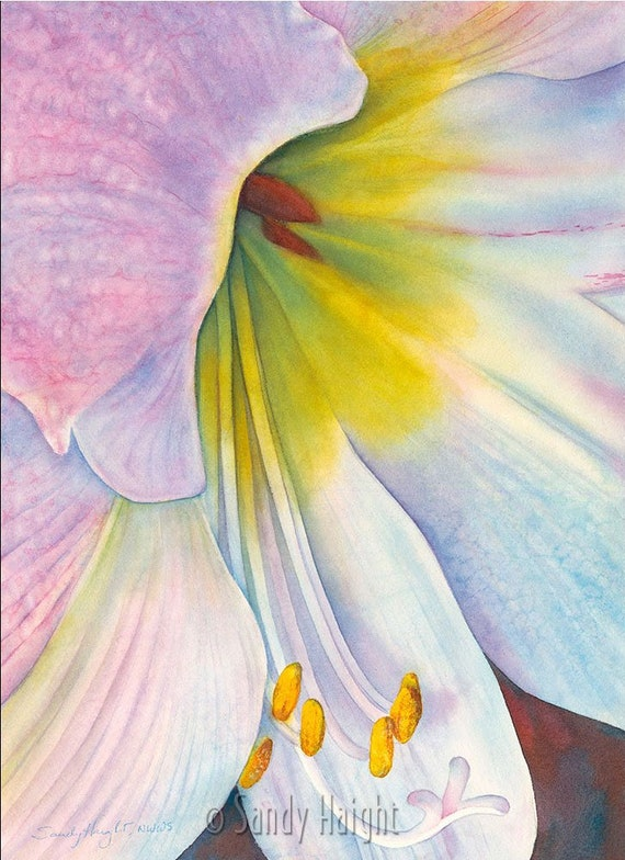 Framed giclee print of watercolor painting, Amaryllis, flower, botanical, garden, holiday, Christmas, gift, wall art, home decor, archival