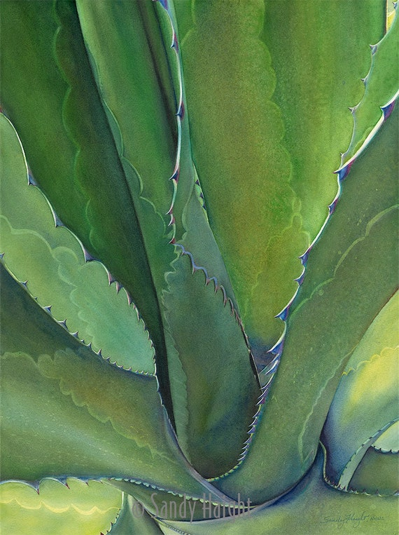 Orignal framed watercolor painting, agave, green, succulent, decor, interior design, wall art, Southwest, plant, botanic, desert garden, 2D