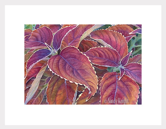 Original Framed Watercolor Painting, art, coleus, plant, leaves, burgundy, purple, gold, flower, botanical, home decor, wall art, gift, ART
