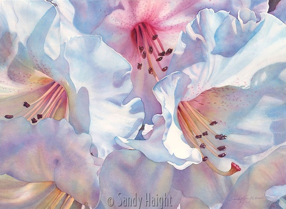 Matted Giclee print of watercolor painting, Rhododendron, flower, floral, botanical, white, pink, wall art, home decor, spring, garden, gift