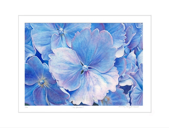 Matted archival giclee print of watercolor painting, hydrangea, blue flower, floral, spring, garden, interior design, decor, wall art, gift